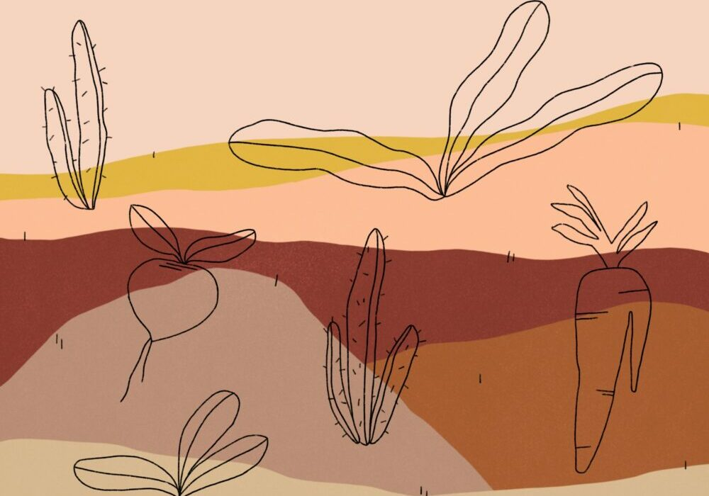 abstract landscape illustration, red palette with line illustrations of plants