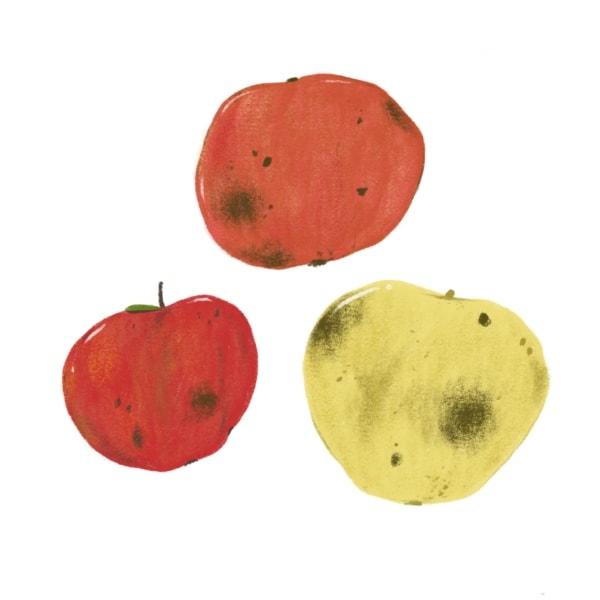 bruised apples illustration