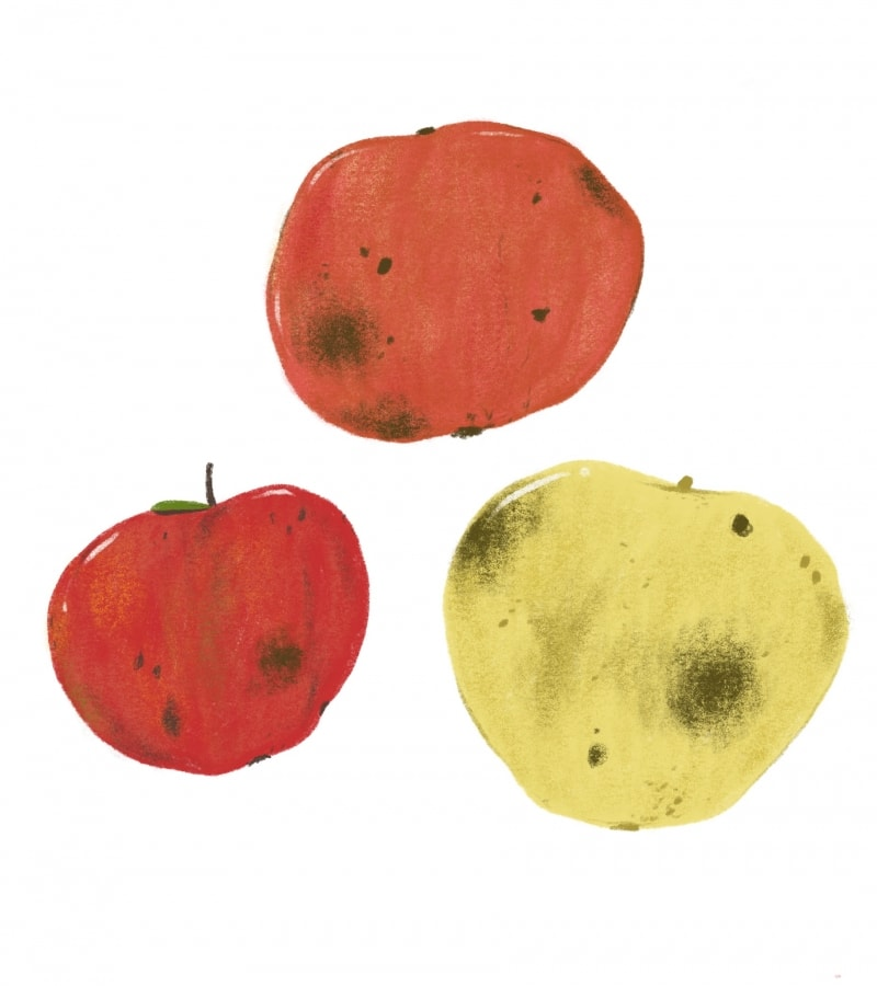 bruised apples illustration