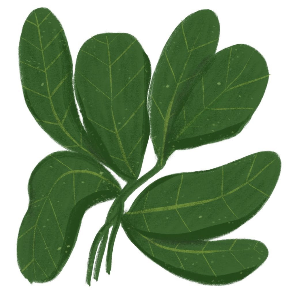 litterless loose spinach illustration
