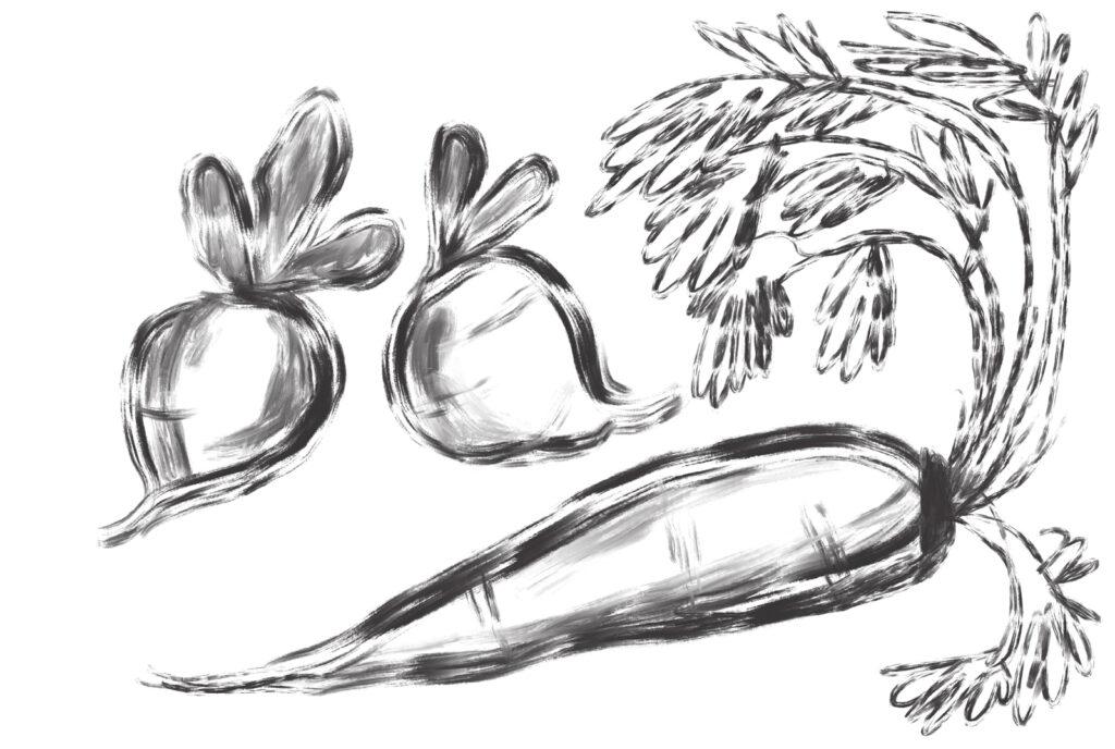 radish and carrot illustration
