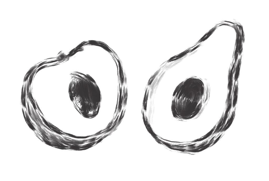 stone fruit illustration