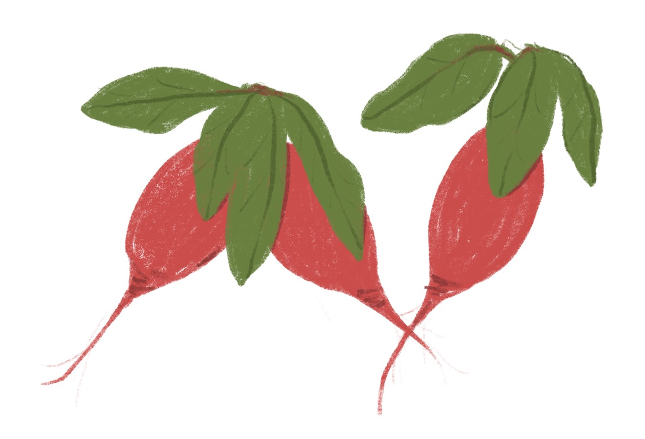 radish_closedloopcooking-cropped