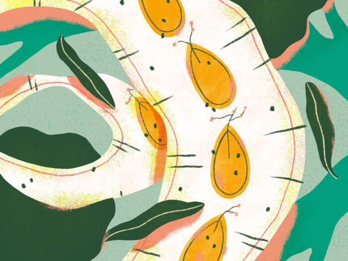 seed receipt illustration