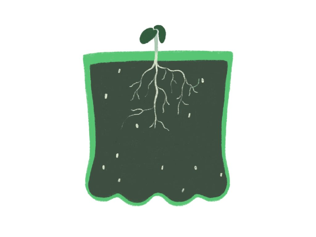 illustration of 2 liter growing sprouts